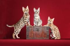 3 kittens